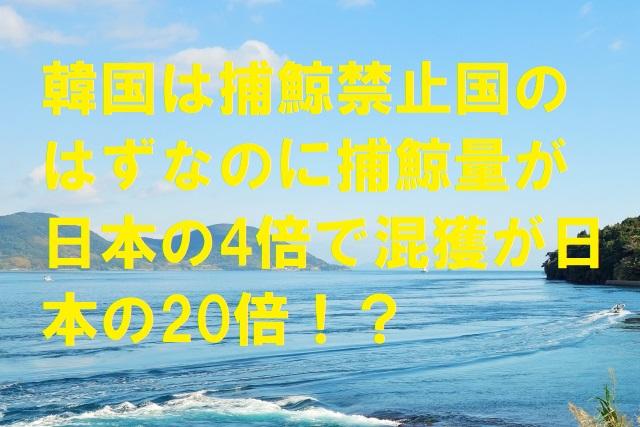 韓国は捕鯨禁止国のはずなのに捕鯨量が日本の4倍で混獲が日本の20倍!?